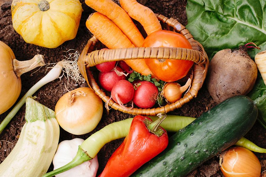たくさんのお野菜たち